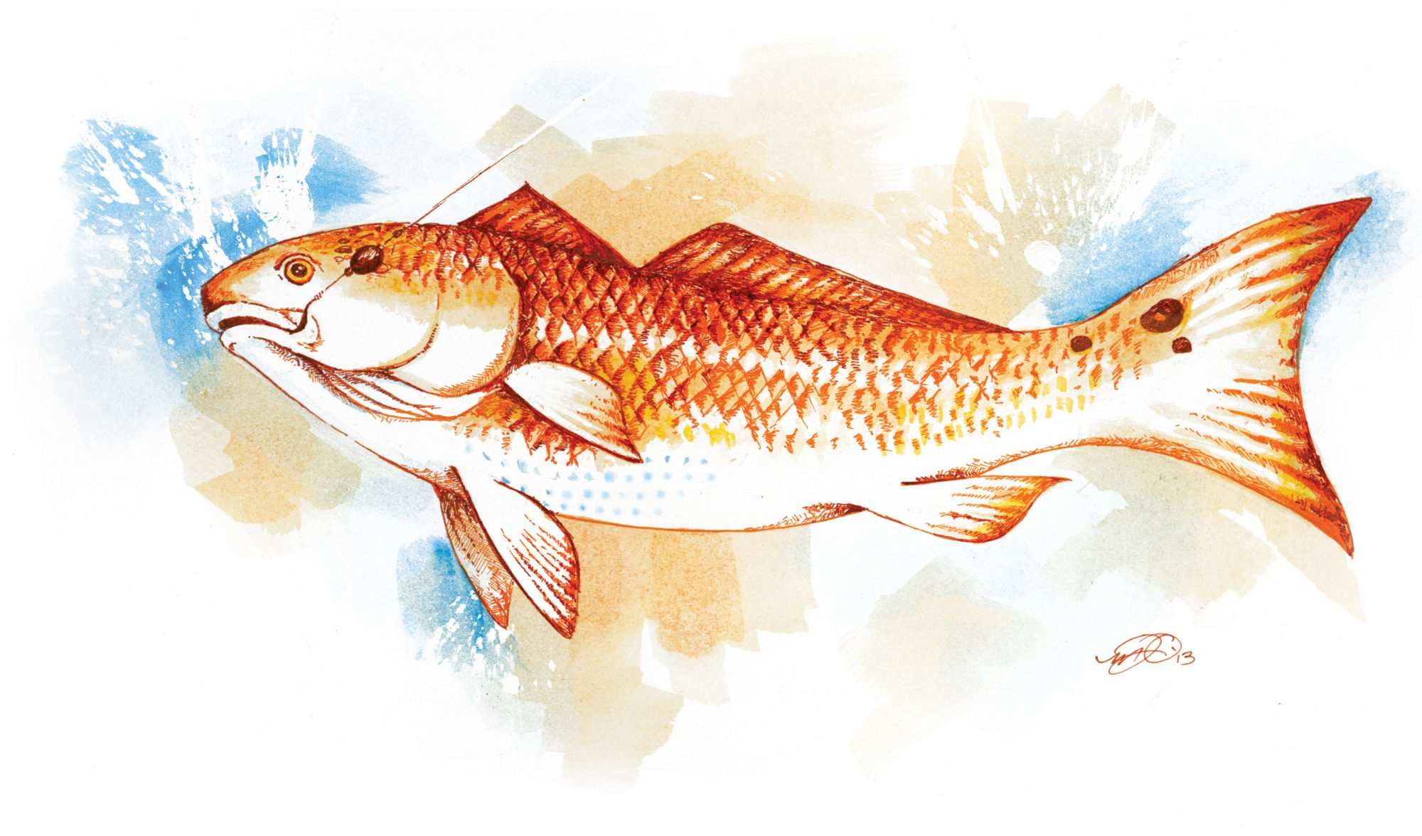 Coastal virginia fishing tournaments official website for Red drum fishing